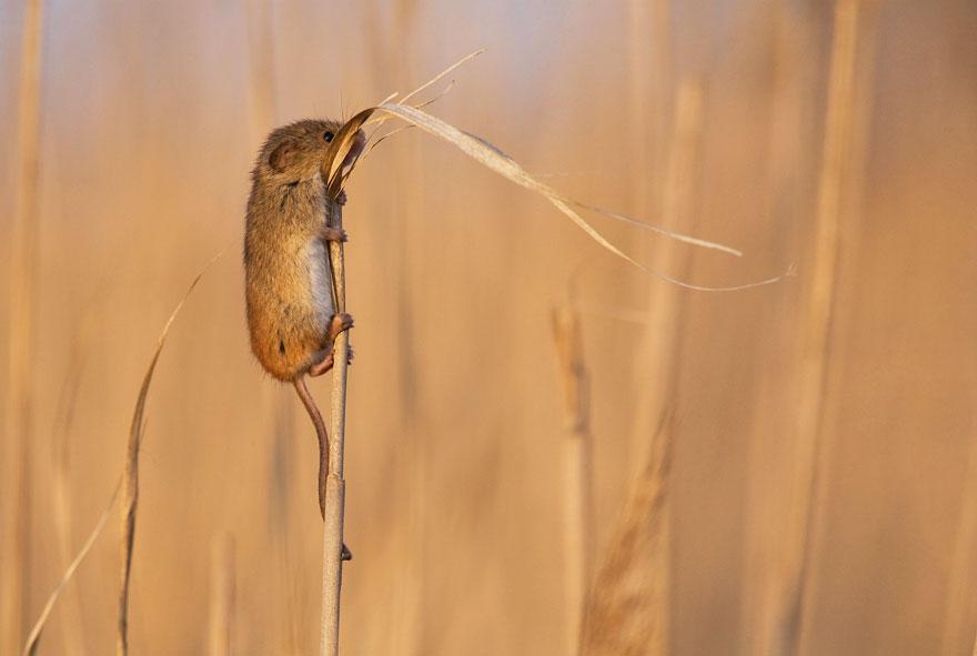 ratones-tiernos-2