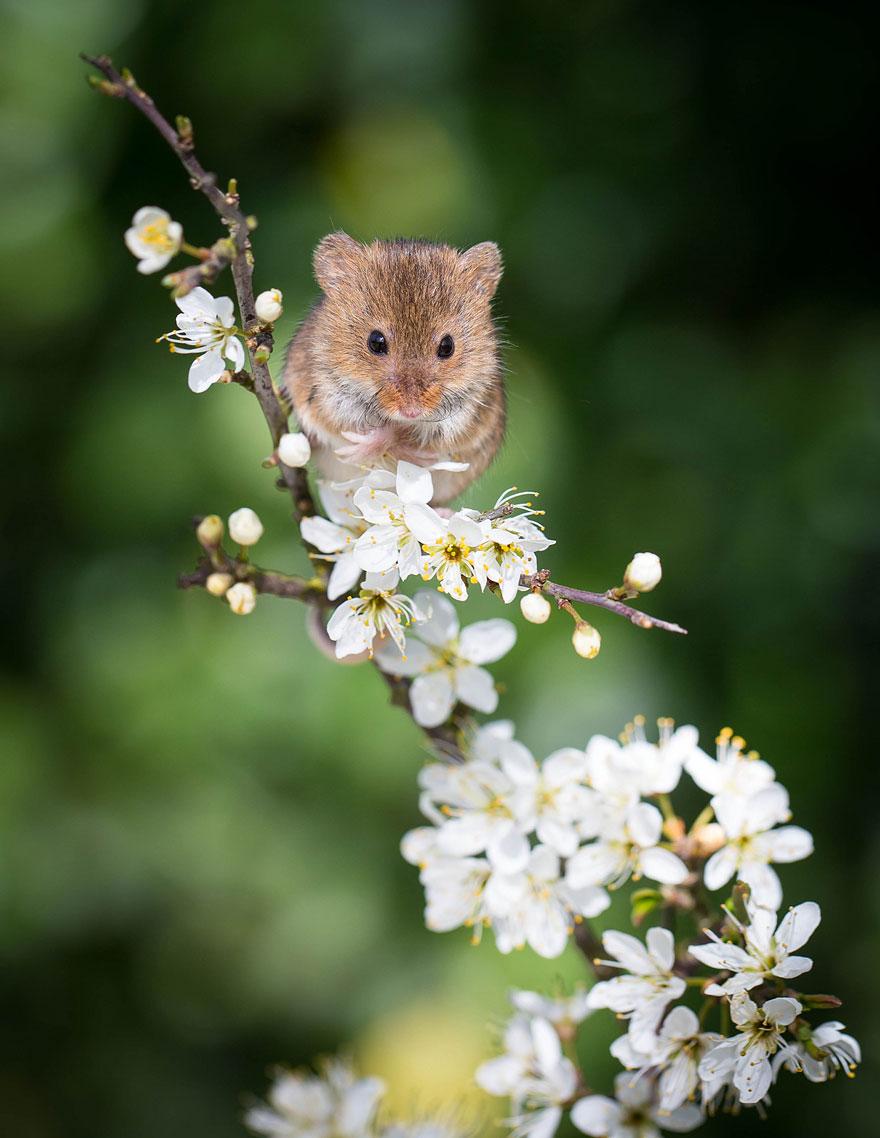 ratones-tiernos-20