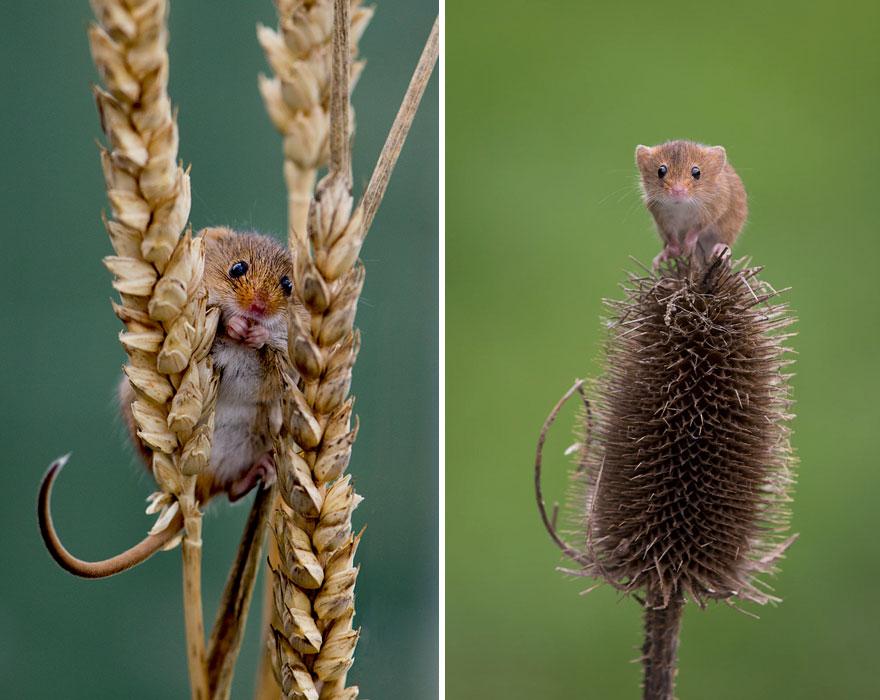 ratones-tiernos-21