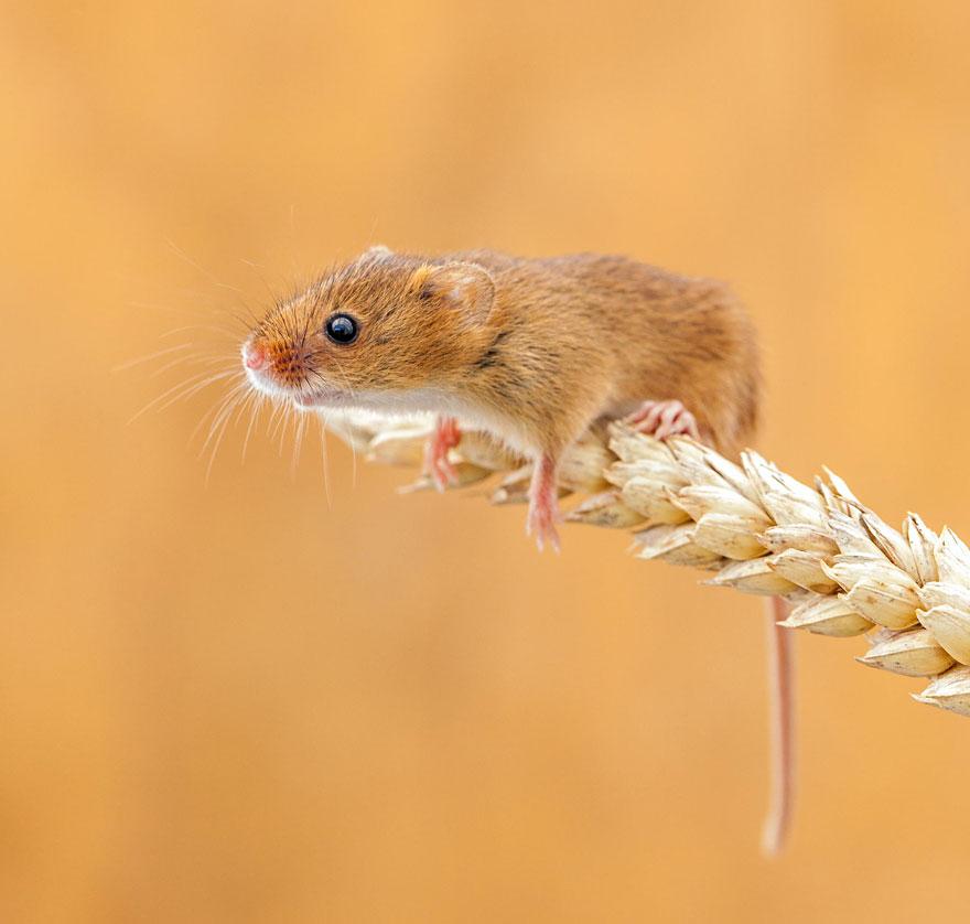ratones-tiernos-24