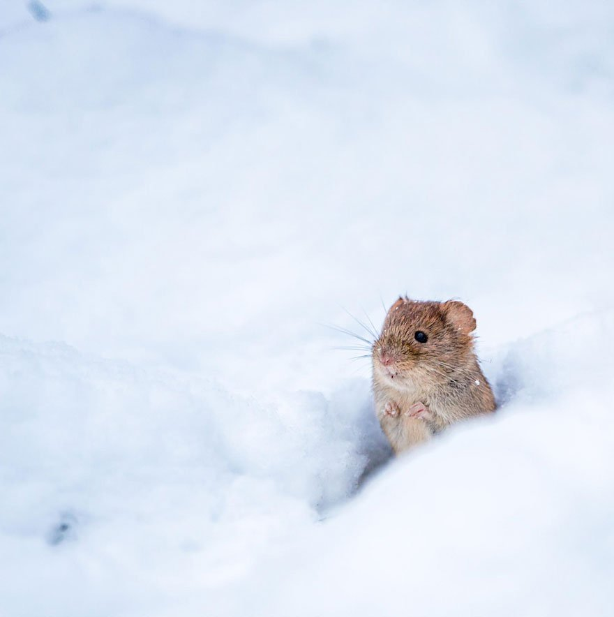 ratones-tiernos-25