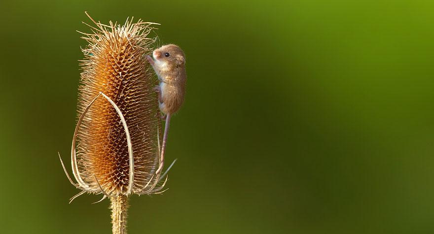 ratones-tiernos-26
