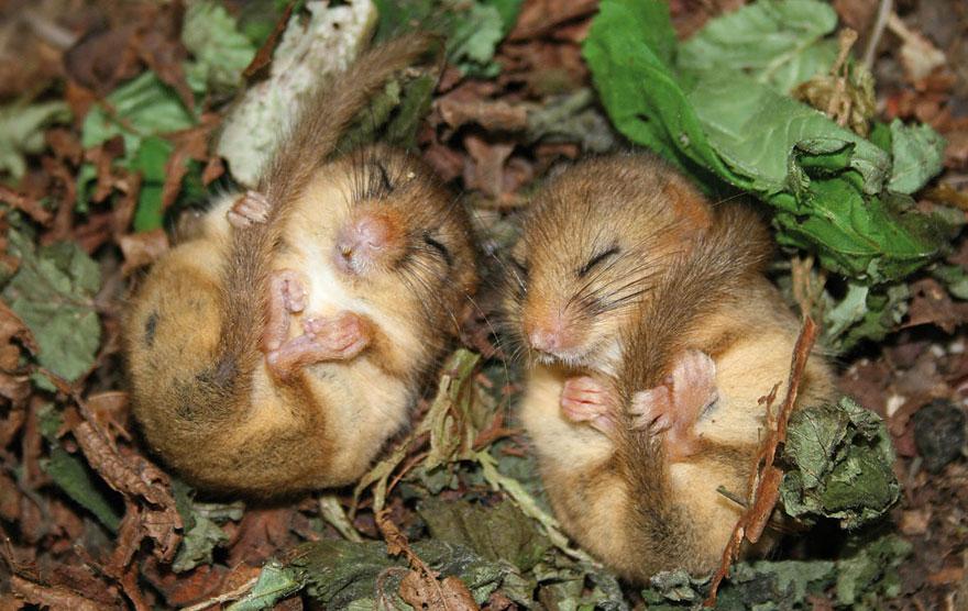 ratones-tiernos-3