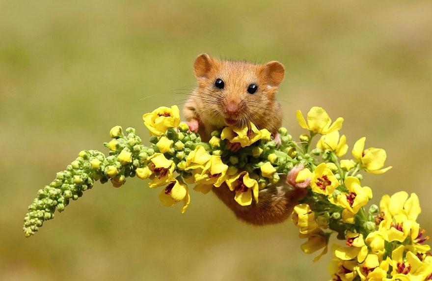 ratones-tiernos-5