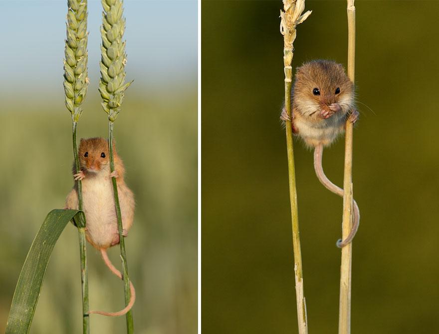 ratones-tiernos-6