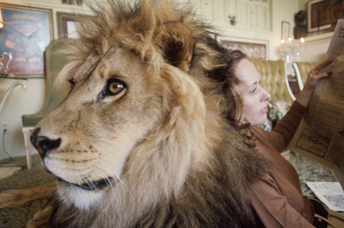 05 1971 Neil el león con Tippi Hedren mientras lee un periódico en su casa en Sherman Oaks, California.
