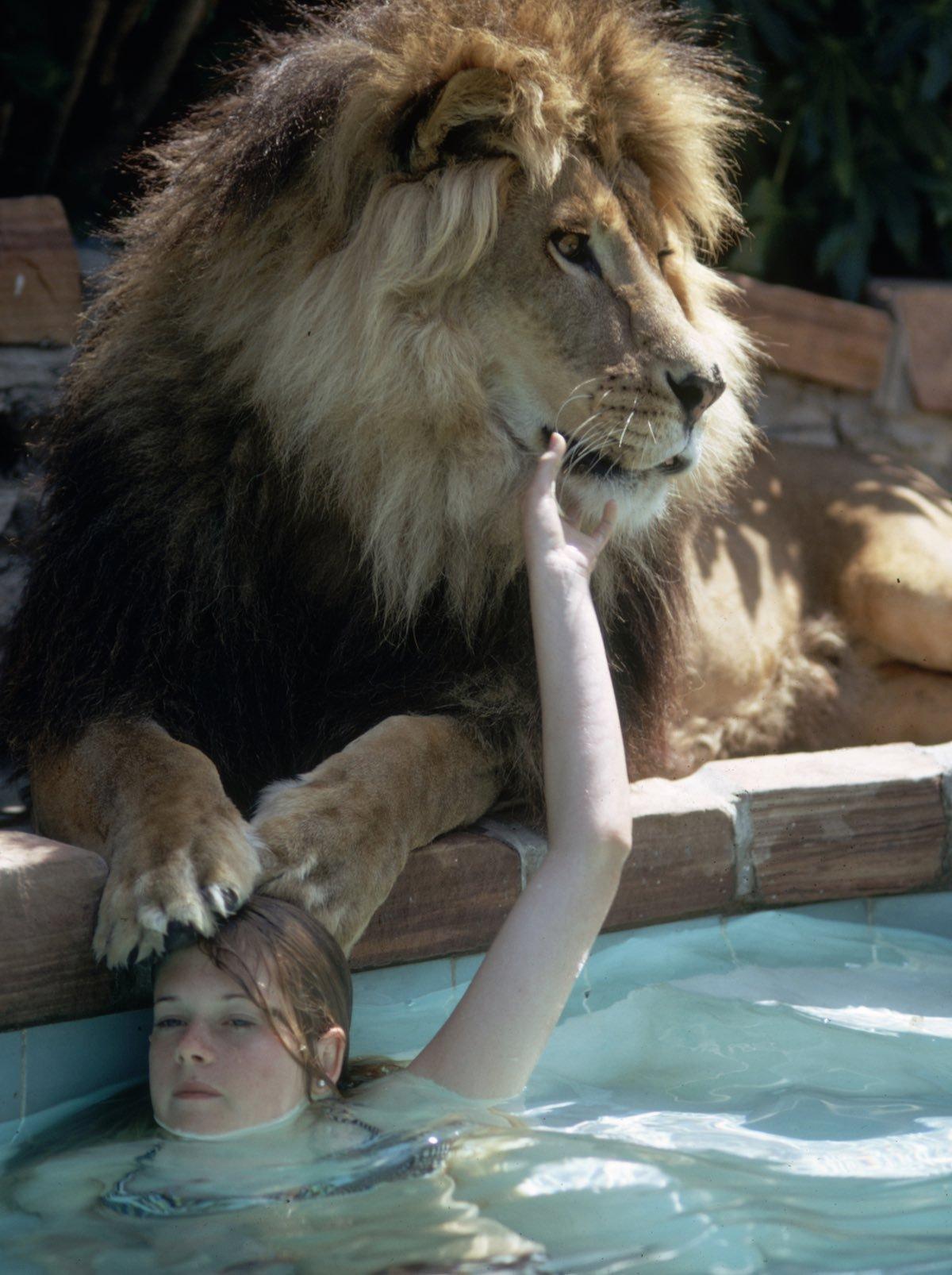Melanie Griffith en una piscina con el león mascota Neil.