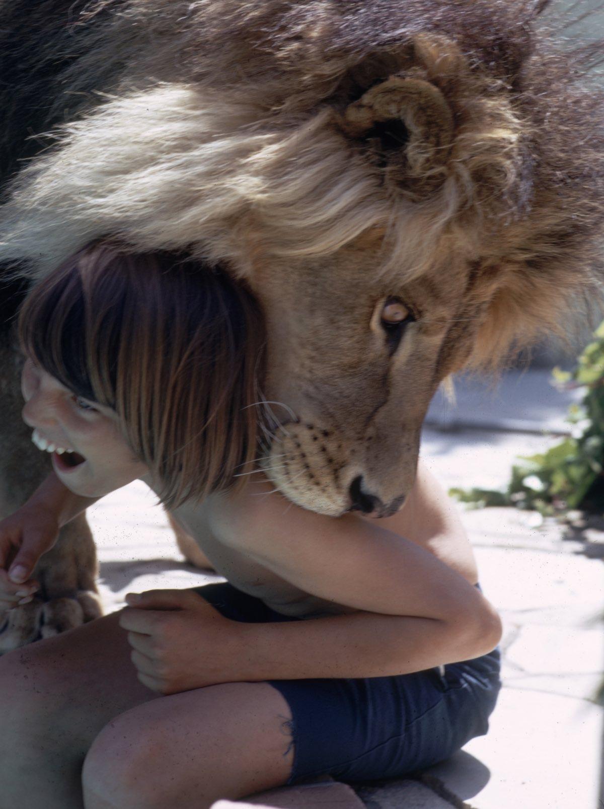 Resultado de imagen de leon como mascota