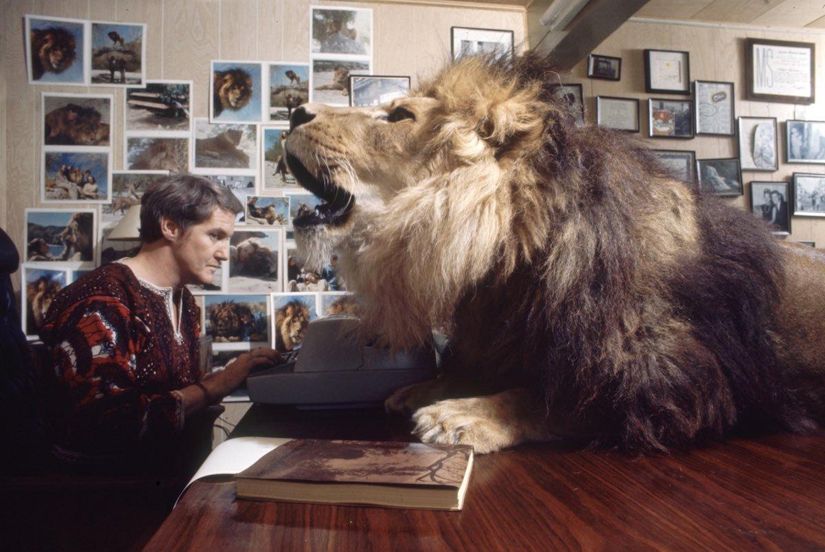 Noel Marshall intenta trabajar en su estudio con un león en su rostro.