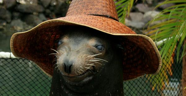 animales-con-sombrero