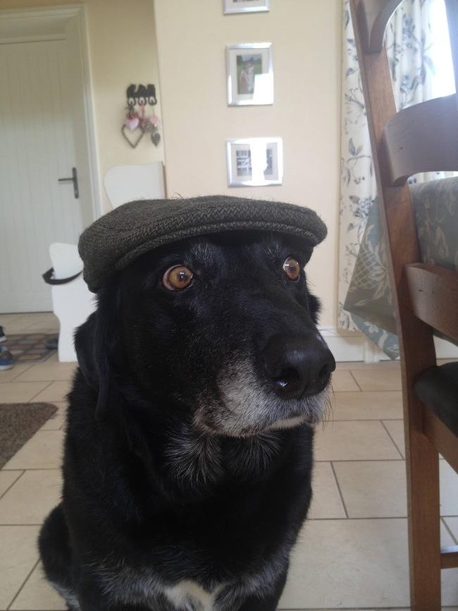 animales-sombreros-11