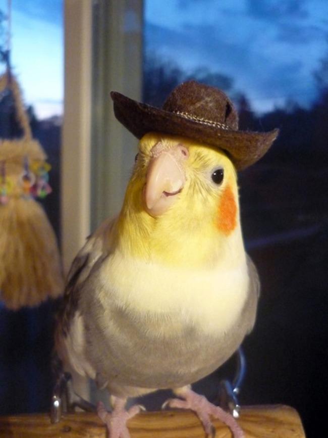 animales-sombreros-12