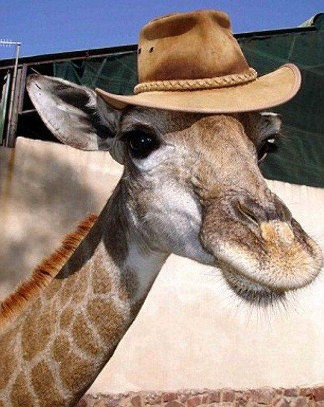 animales-sombreros-13