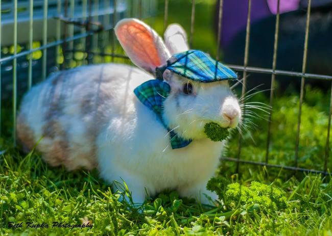 animales-sombreros-2