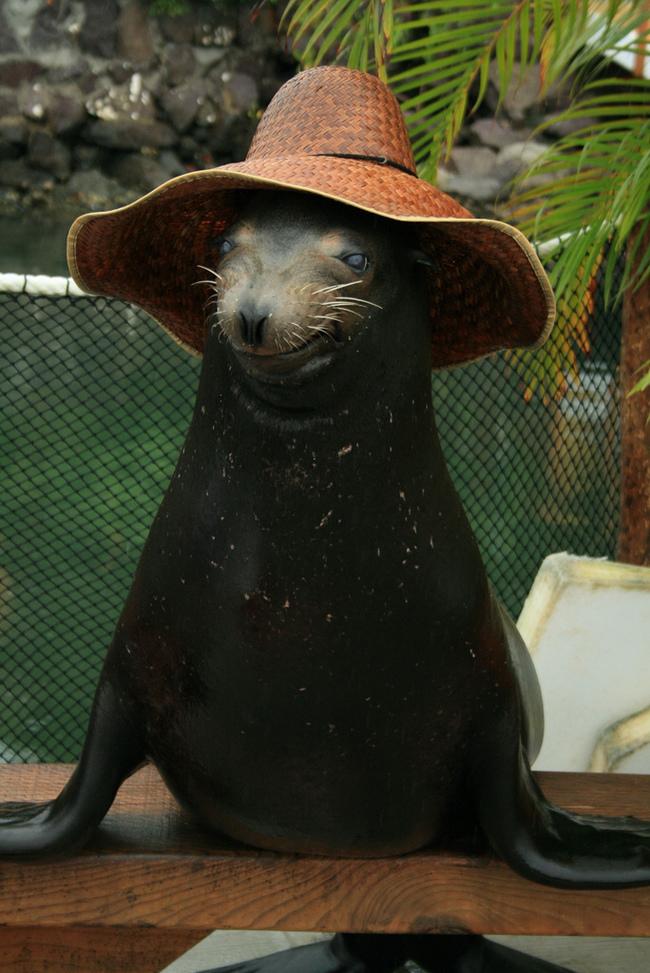 animales-sombreros-4