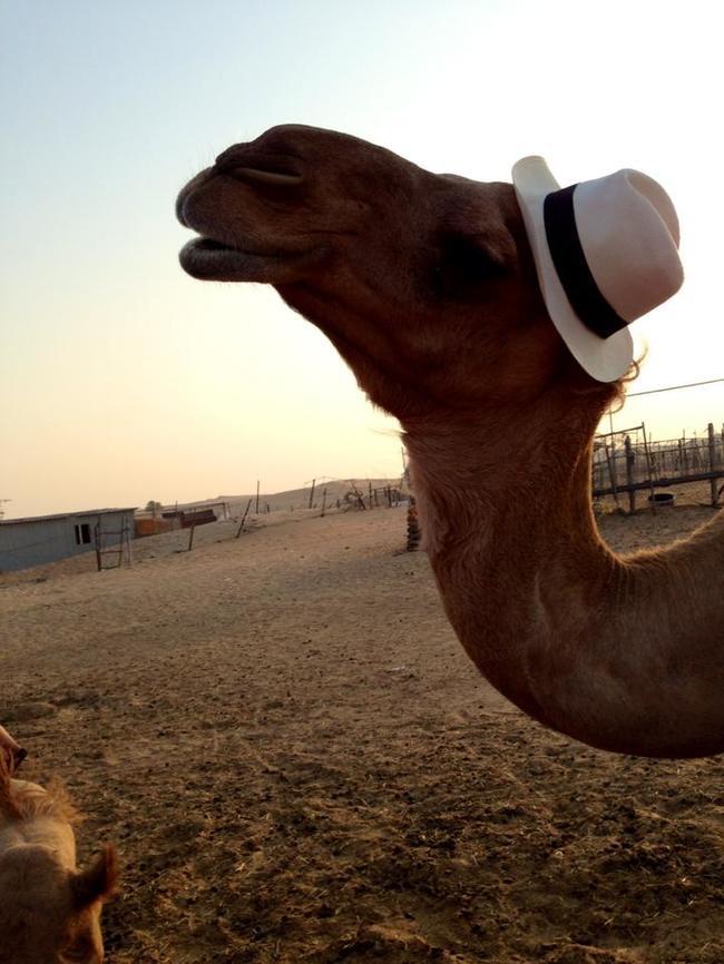 animales-sombreros-5