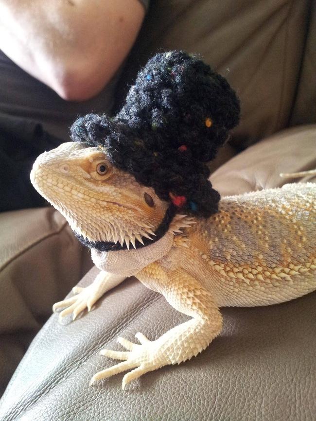 animales-sombreros-7