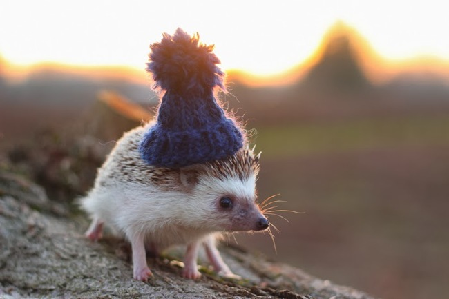 animales-sombreros-9