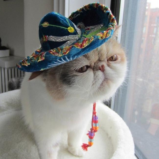 animales_sombrero1