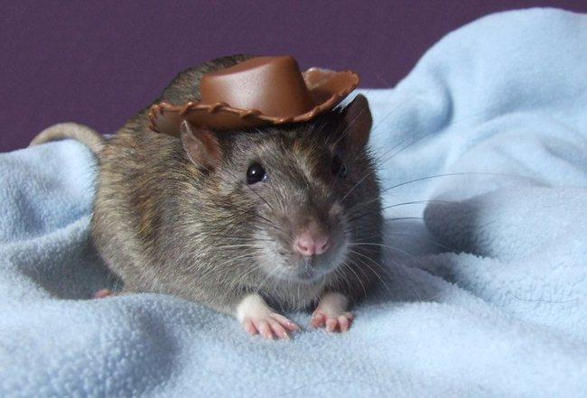 animales_sombrero12
