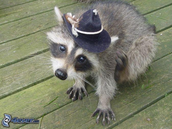 animales_sombrero14