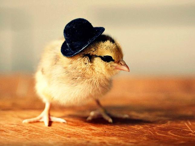animales_sombrero18