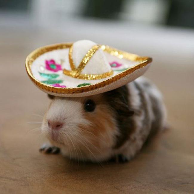 animales_sombrero4