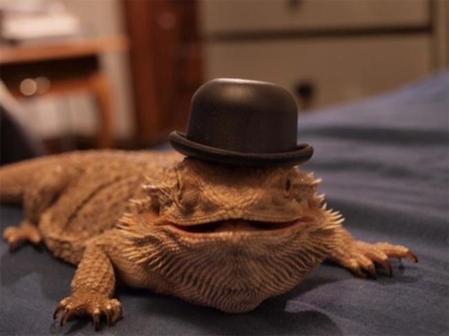 animales_sombrero6