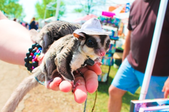 animales_sombrero7