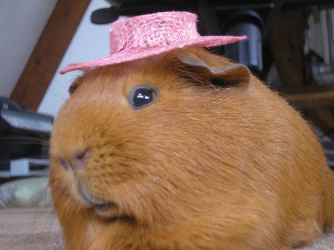 animales_sombrero9