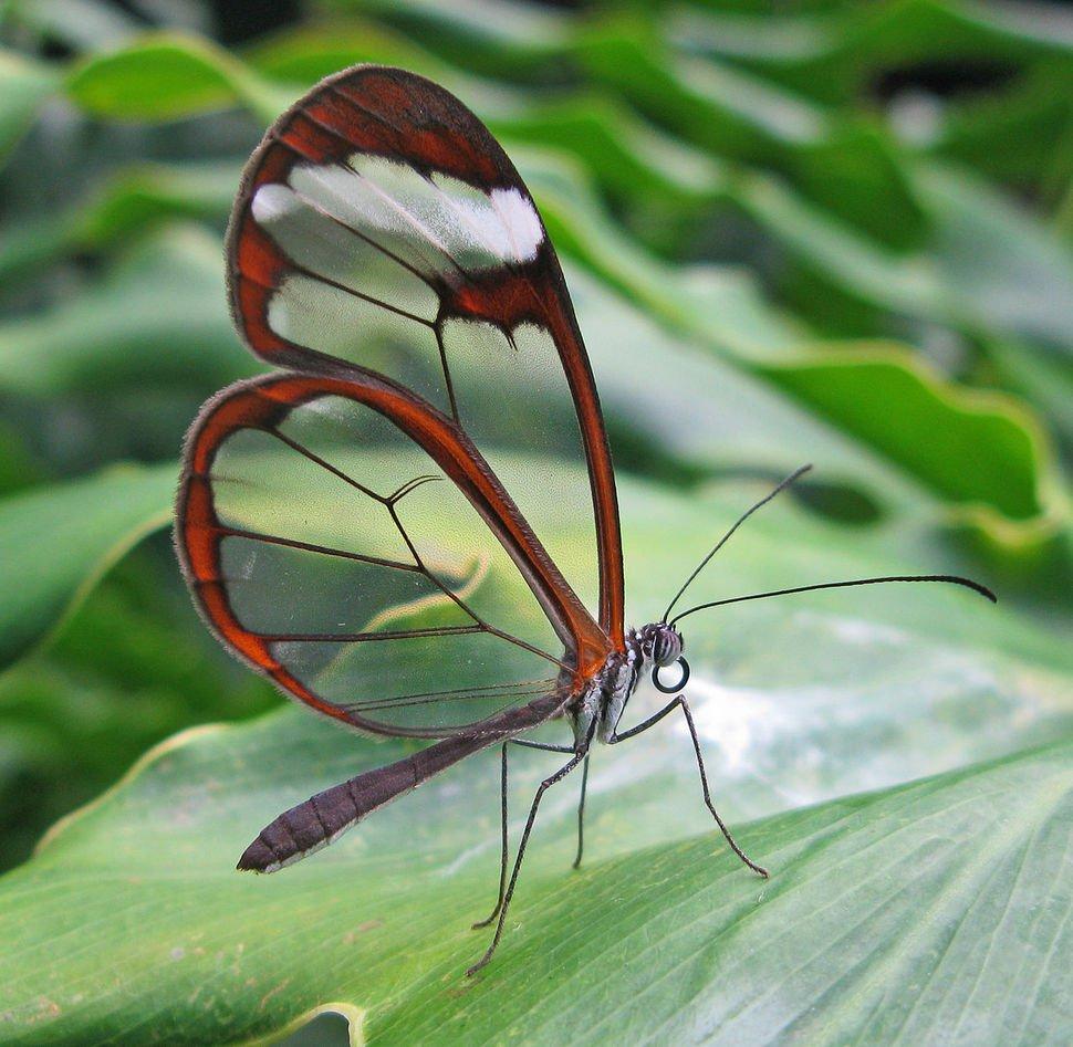 animales_transparentes4