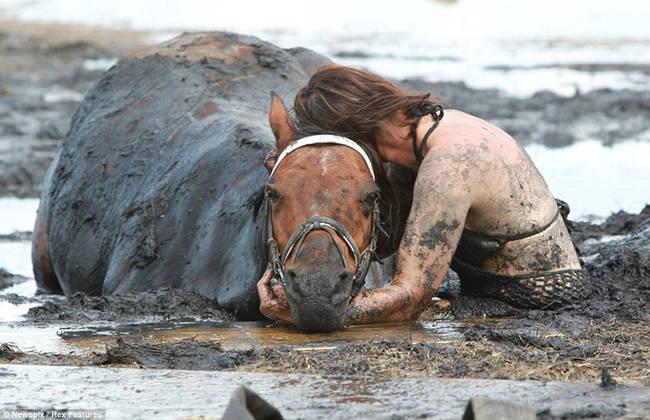 caballo-rescate-1