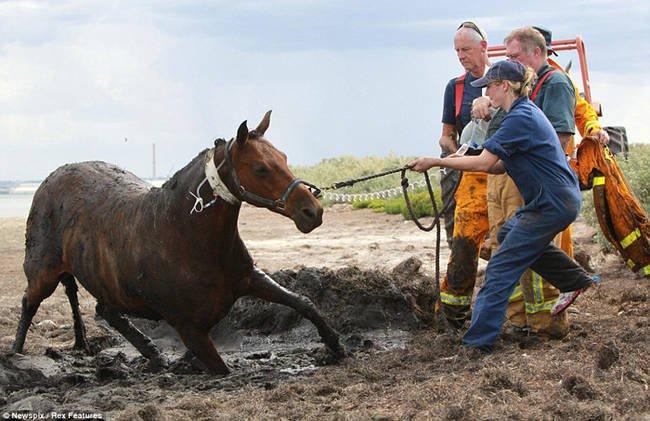 caballo-rescate-11