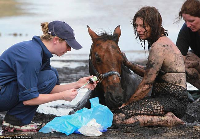 caballo-rescate-5