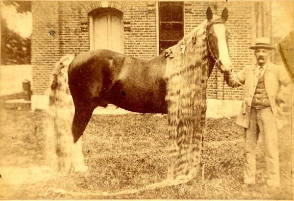 caballos antiguos raros 1