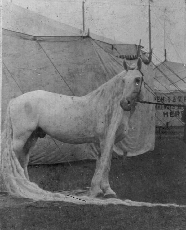 caballos antiguos raros 2
