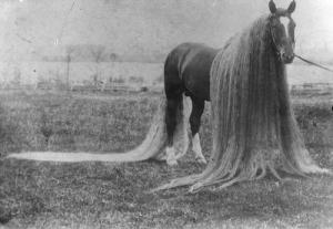 caballos antiguos raros 3