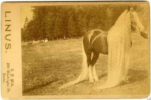 caballos antiguos raros 5