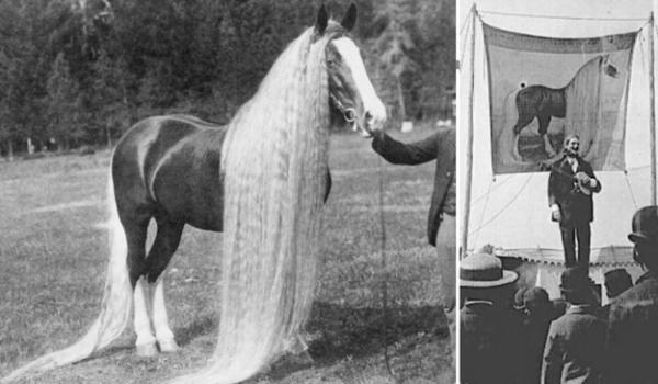caballos antiguos raros 6