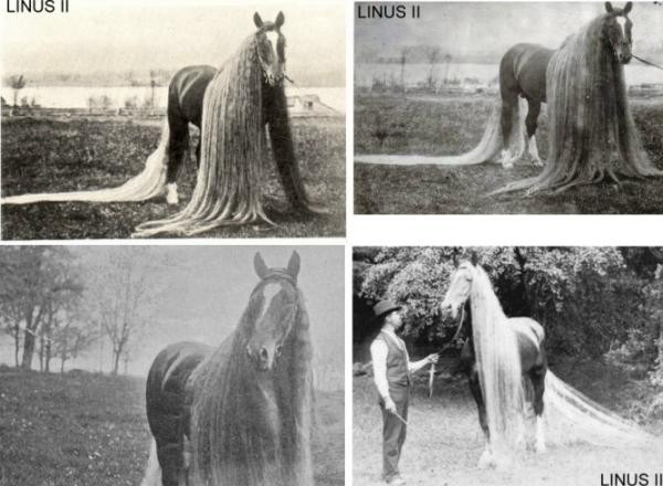 caballos antiguos raros 7