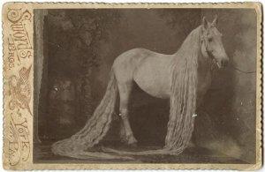 caballos antiguos raros 8
