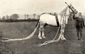 caballos antiguos raros 9