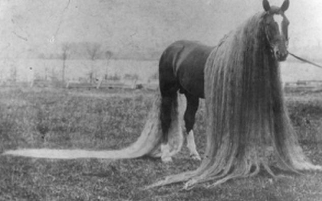 caballos-melena