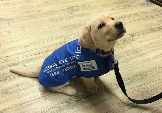 cachorros de perro en primer dia trabajo 10