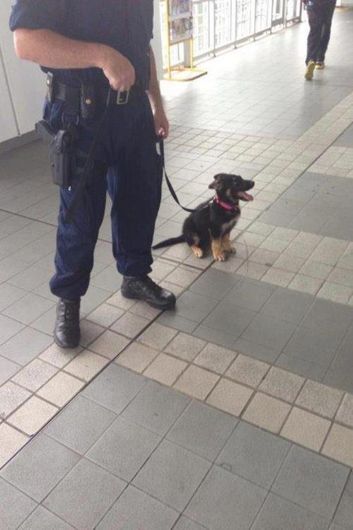 cachorros de perro en primer dia trabajo 13