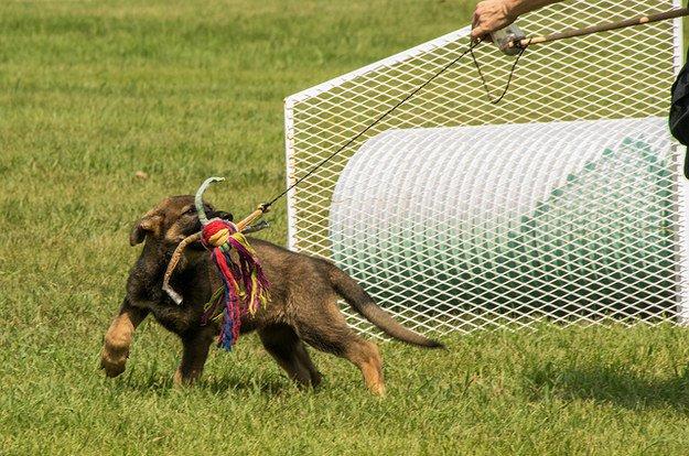 cachorros de perro en primer dia trabajo 17