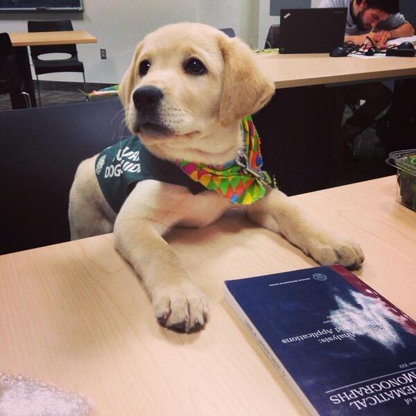 cachorros de perro en primer dia trabajo 4