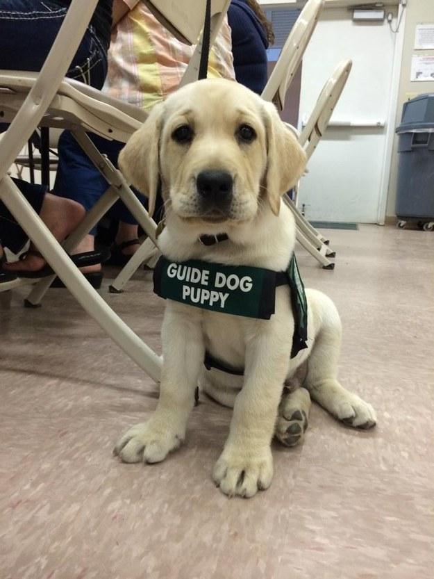 cachorros de perro en primer dia trabajo 6