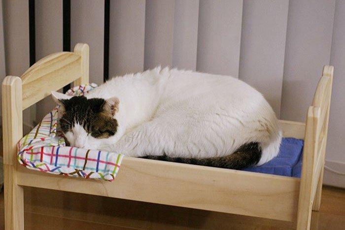 camas gatos ikea 10