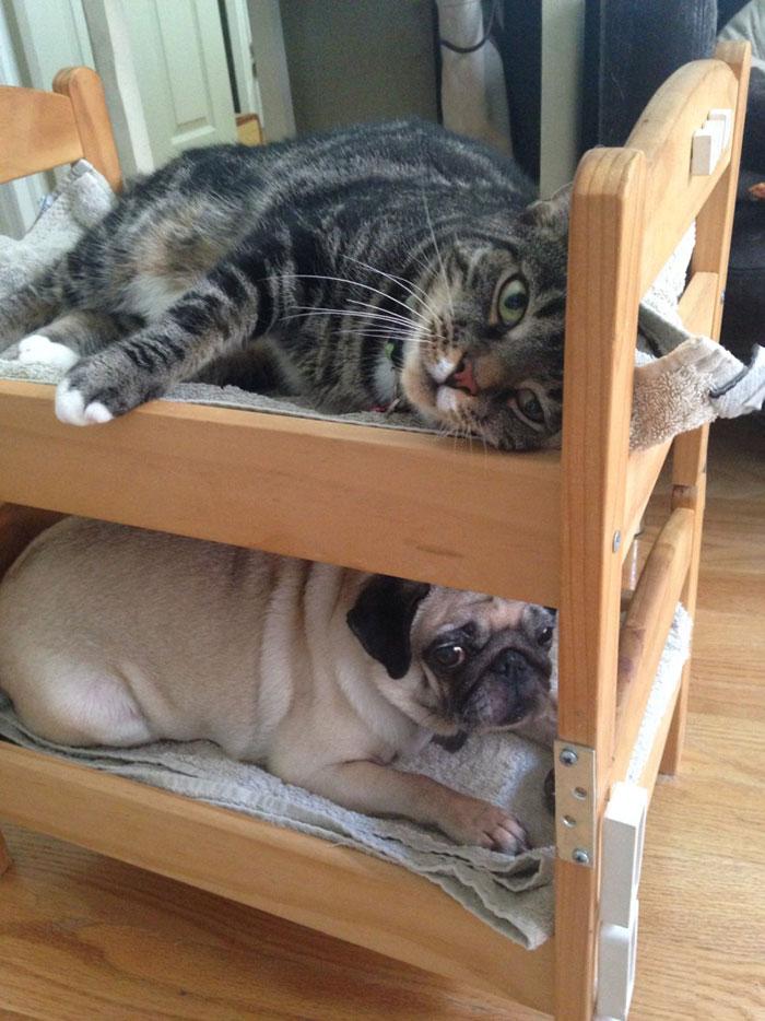 camas gatos ikea 11